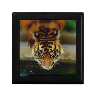 Cara del tigre joyero cuadrado pequeño