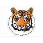 Cara del tigre postal