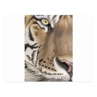 Cara del tigre postales