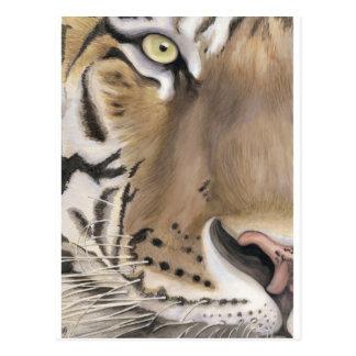 Cara del tigre tarjetas postales
