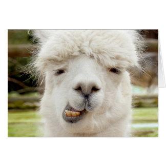 Cara divertida de la alpaca tarjeta de felicitación