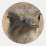 Cara divertida de la avestruz pegatina redonda