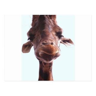 Cara divertida de la jirafa tarjeta postal