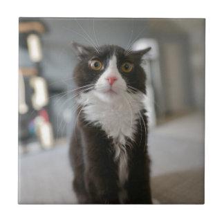Cara divertida del gato azulejo cuadrado pequeño