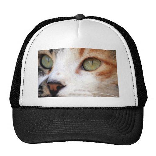 Cara dulce del gato gorros bordados