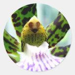cara en la flor etiqueta redonda