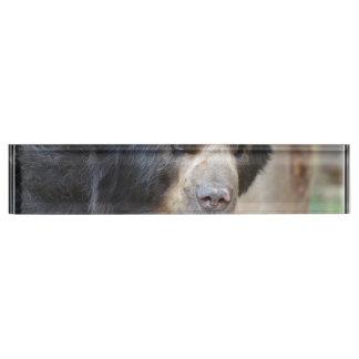 Cara fantástica de un oso negro