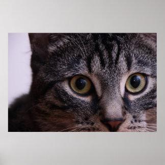 Cara gris 2 del gatito impresiones