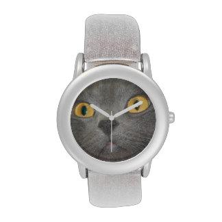 Cara gris del gato