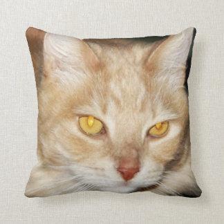 Cara hermosa del gato de Coon de Maine Cojín