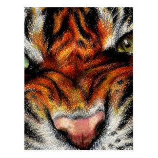 Cara hermosa del gato grande tarjeta postal
