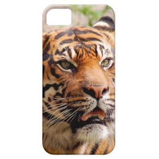 Cara hermosa del tigre iPhone 5 Case-Mate funda