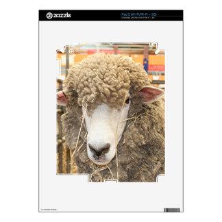 Cara lanosa de las ovejas calcomanías para iPad 2
