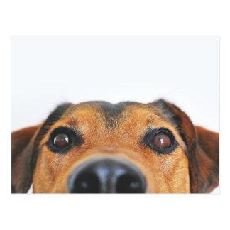 Cara linda del perro postales