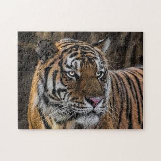Cara lisa del gato montés del tigre puzzle