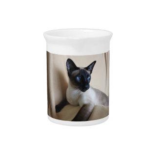 Cara magnífica del gato siamés jarras de beber