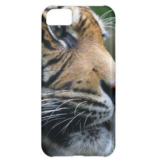 Cara magnífica del tigre de Bengala