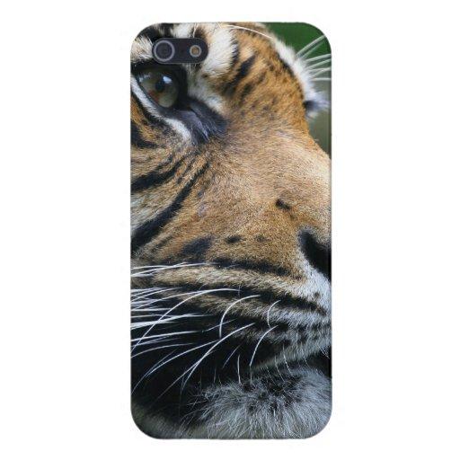 Cara magnífica del tigre de Bengala iPhone 5 Coberturas