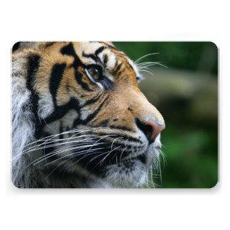 Cara magnífica del tigre de Bengala Invitaciones Personalizada