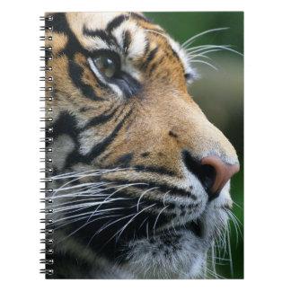 Cara magnífica del tigre de Bengala Libretas