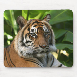 Cara Mousepad del tigre