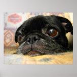 Cara negra del perrito del barro amasado impresiones