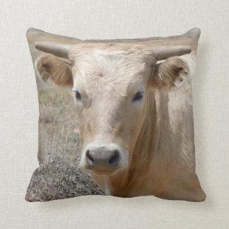 Cara occidental linda de la vaca de Charolais Cojín