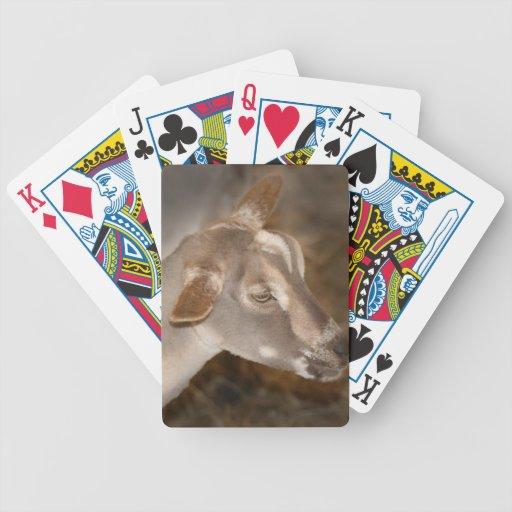Cara rayada afeitada gama alpina de la cabra del b cartas de juego