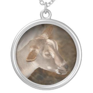 Cara rayada afeitada gama alpina de la cabra del b colgante redondo