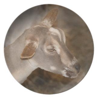Cara rayada afeitada gama alpina de la cabra del b plato para fiesta