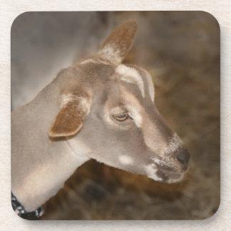 Cara rayada afeitada gama alpina de la cabra del b posavaso