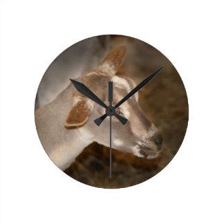 Cara rayada afeitada gama alpina de la cabra del b relojes de pared
