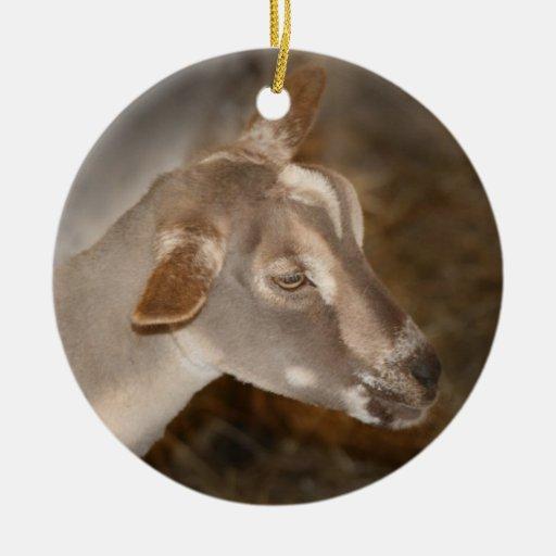 Cara rayada afeitada gama alpina de la cabra del ornamentos para reyes magos