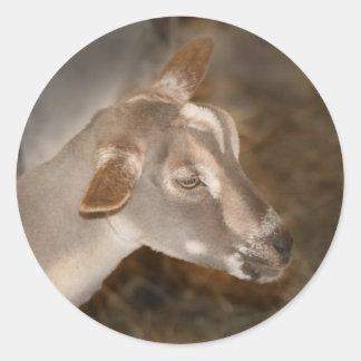 Cara rayada afeitada gama alpina de la cabra del pegatina redonda