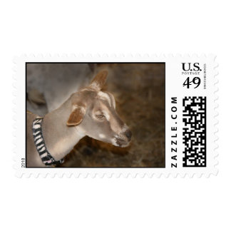 Cara rayada afeitada gama alpina de la cabra del sello