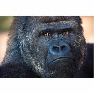 Cara severa del gorila fotoescultura vertical