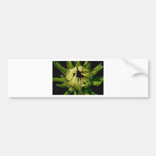 cara verde etiqueta de parachoque