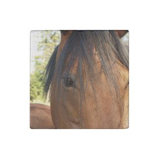 Cara y ojo foto del caballo de bahía de los imán de piedra