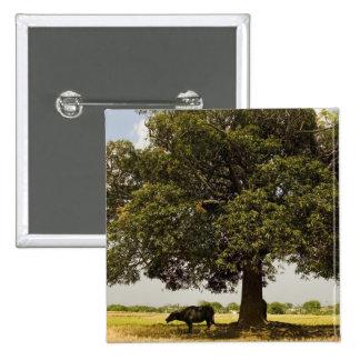 Carabao Under a Tree (3) Pinback Button