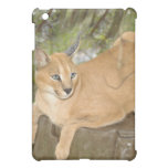 Caracal Lynx  Case For The iPad Mini