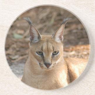Caracal Lynx Coaster