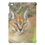 Caracal Lynx  iPad Mini Cases