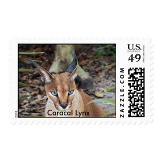 Caracal Lynx Stamp