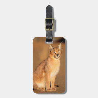 Caracal portrait, Harnas Private Reserve Luggage Tag