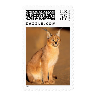 Caracal portrait, Harnas Private Reserve Postage