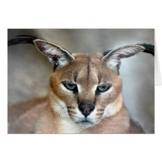 Caracal Wild Cat Note card