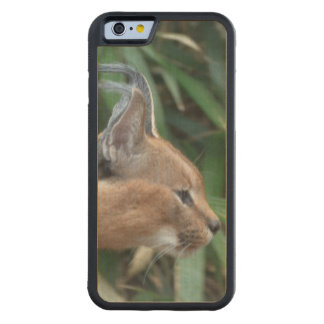 Caracal Carved® Maple iPhone 6 Bumper Case