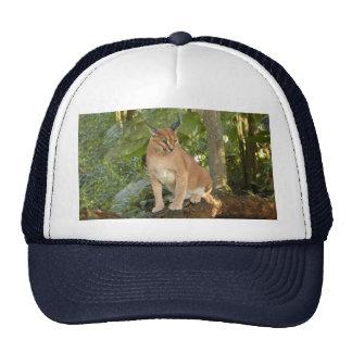 CaracalBCR015 Trucker Hat