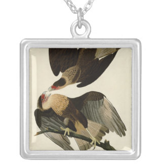 Caracara brasileño Eagle Colgante Cuadrado