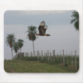 Caracara con cresta en vuelo tapetes de ratón